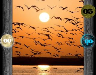Almes Avançados - Aves de Estínfale